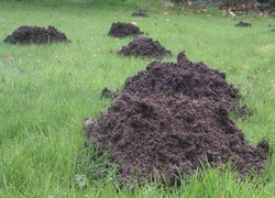 mole control in East Grinstead