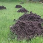 the pest control team catching moles in oxted