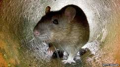 rodent control in lingfield